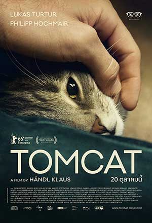 คลิก ดูรายละเอียด Tomcat