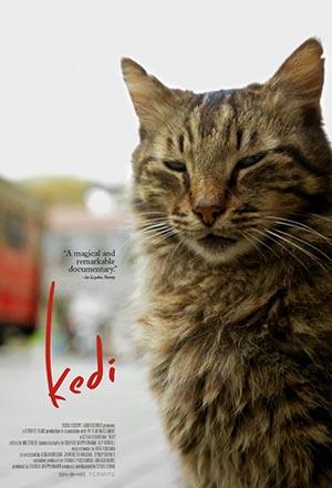 คลิก ดูรายละเอียด Kedi