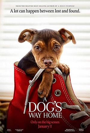 คลิก ดูรายละเอียด A Dog's Way Home